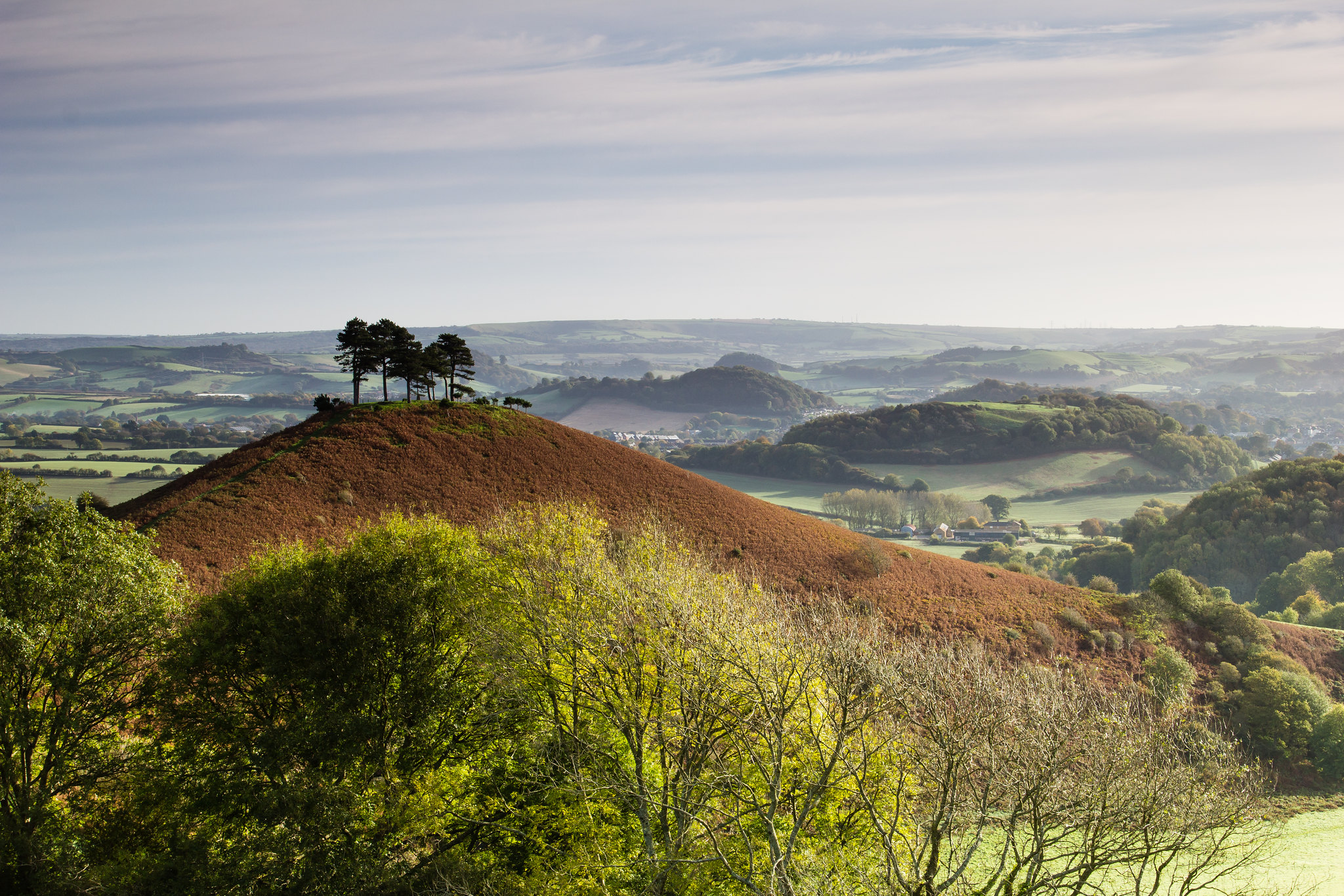 Photo of Colmer's Hill in Dorset: a brown hill in the middle ground with sparse trees on top, and rolling hills and mist in the background