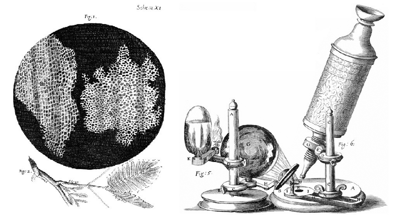 Black and white drawing of lots of interconnected cells on a microscope slide, next to another drawing of a microscope