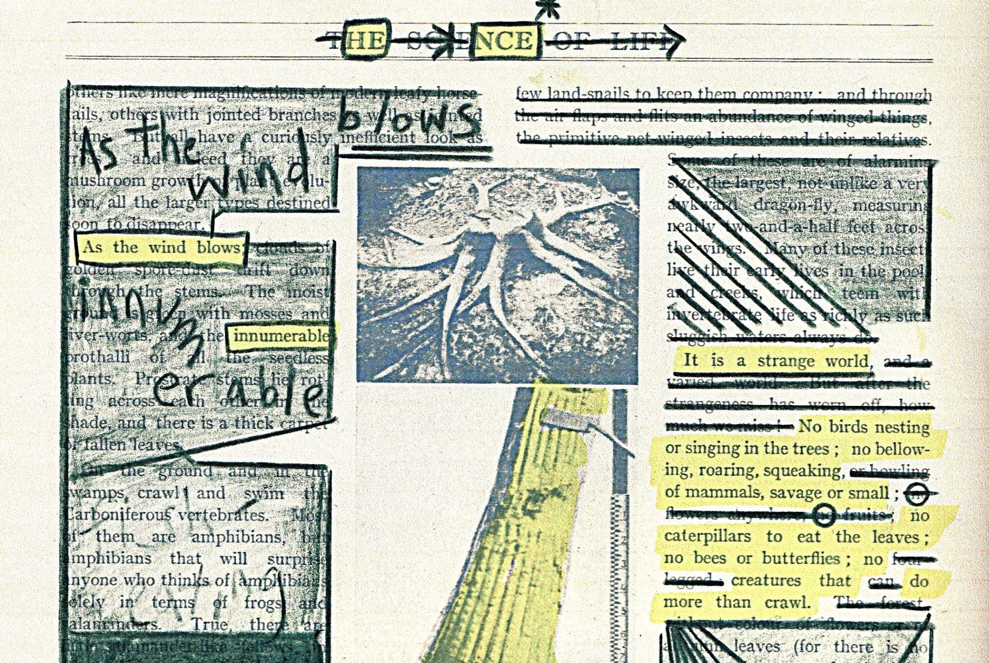 An erasure poem, scribbled and doodled over a page taken from 'The Science of Life', it reads: Hence, as the wind blows innumerable... (continued on the challenge page)