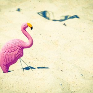 flamingo in the sand
