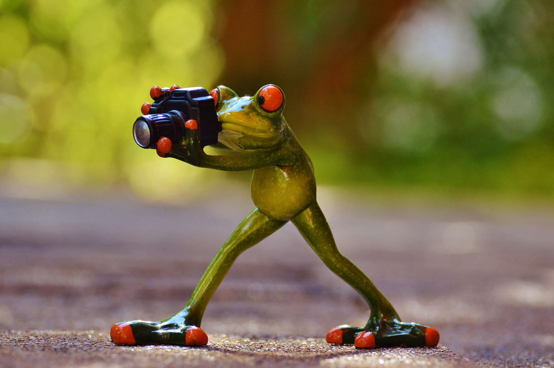 photo: small frog statue holding a camera to its eye