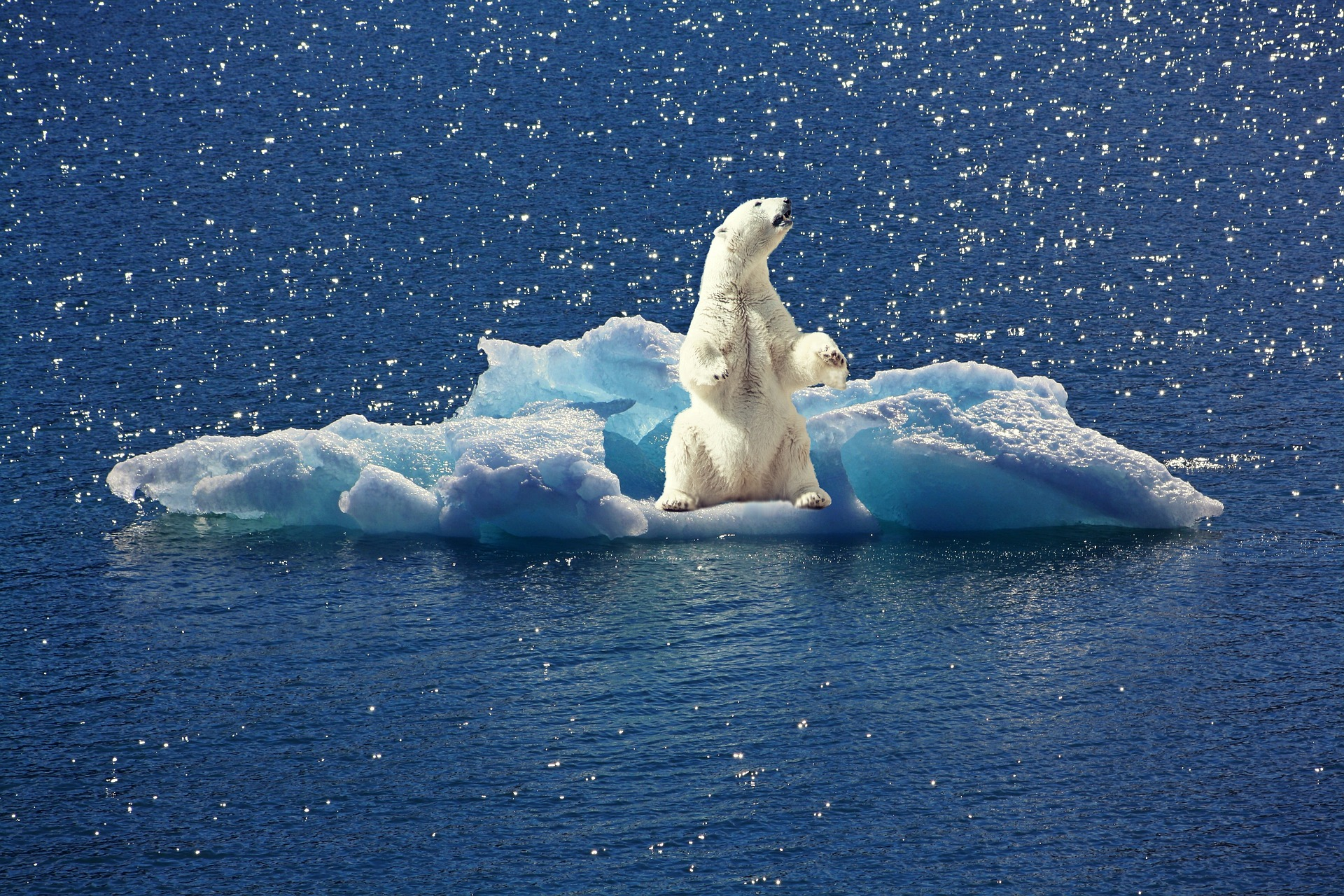 Photo of a Polar bear sitting on a tiny platform of melting ice