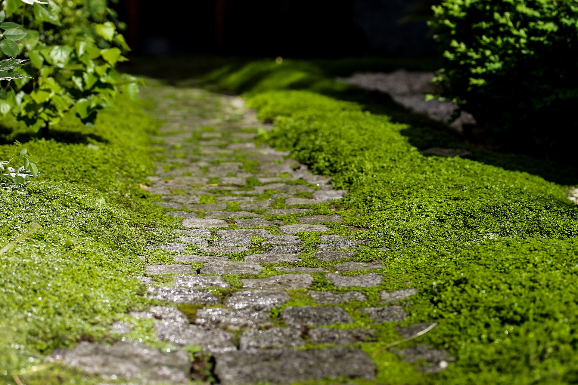 mossy cobbled path