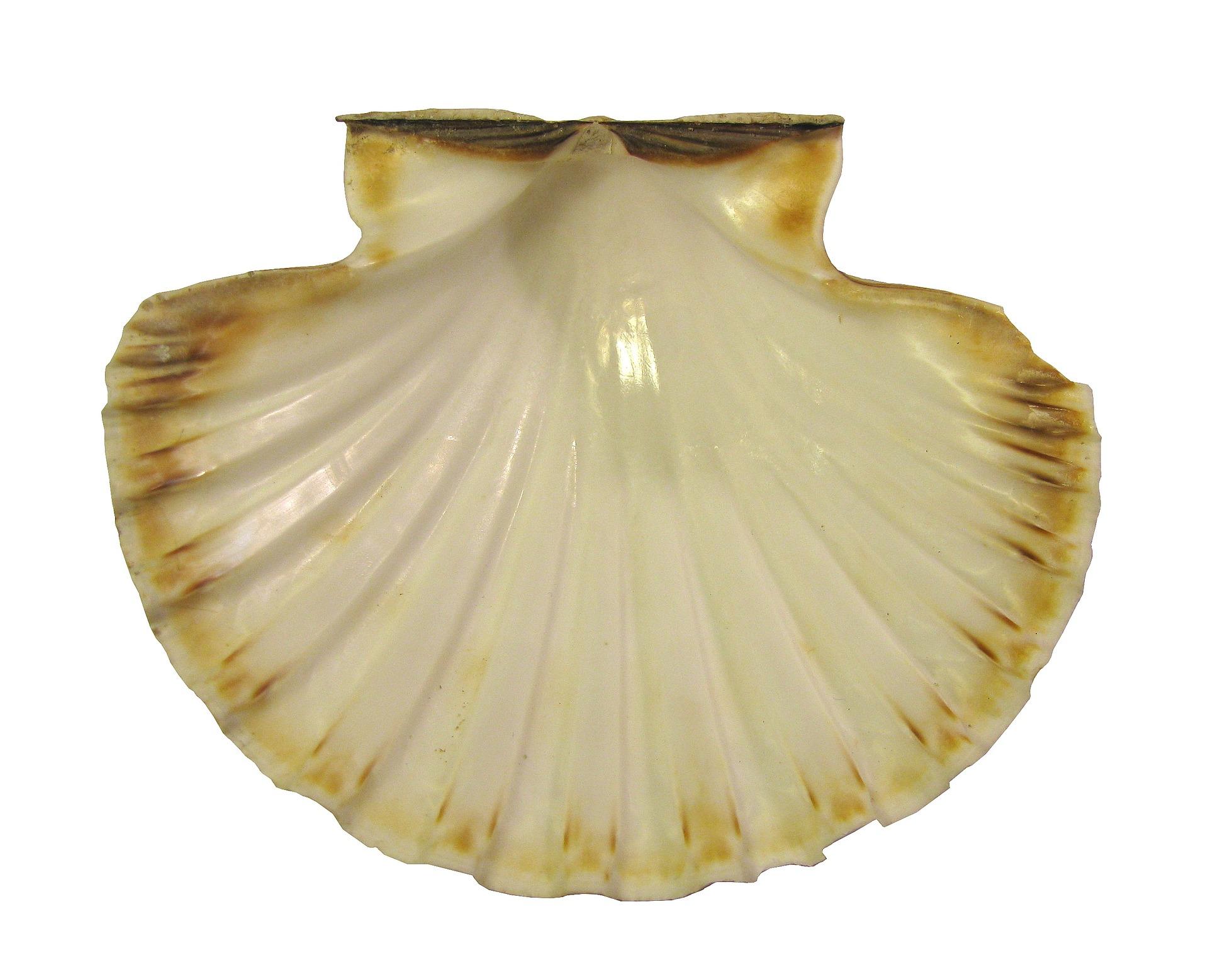 seashell-1063448_1920