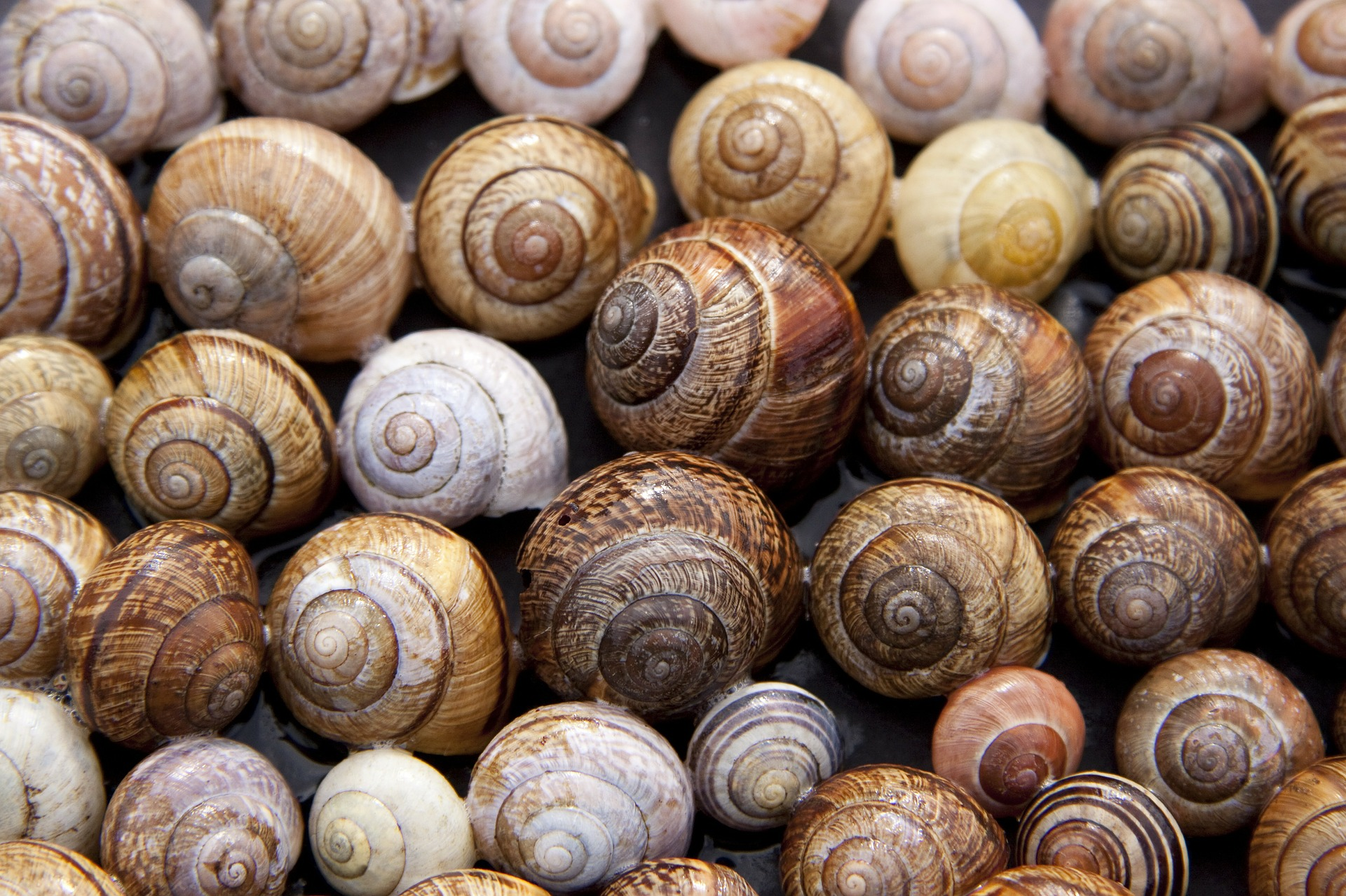 close up on lots of snail shells