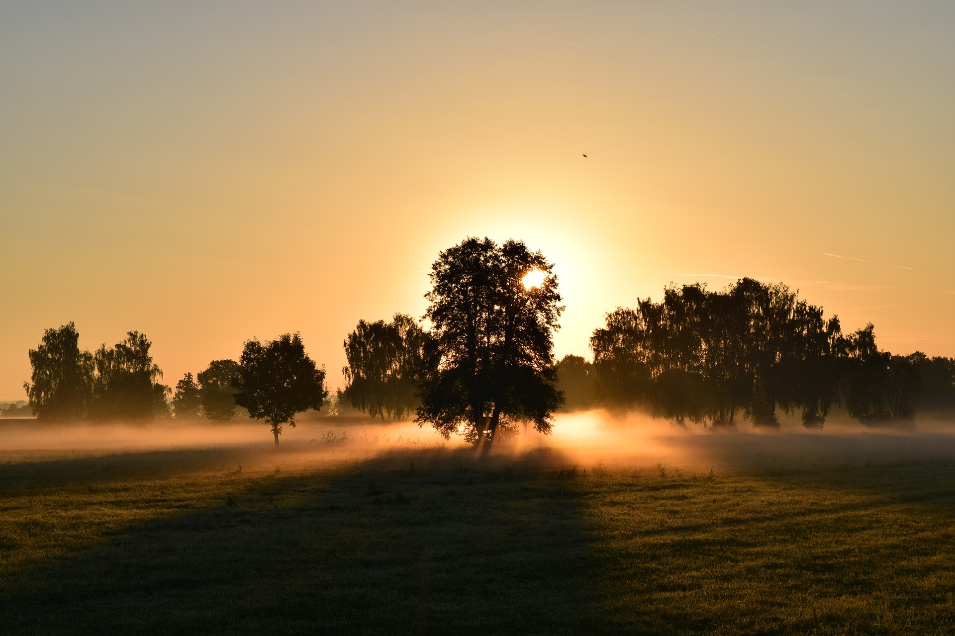 Photo of a sunrise over a tree